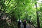 グリーンハイキング