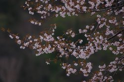 【5/15】千手の森自然情報