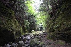 【再募集】苔の回廊・御沢金剛峡探検