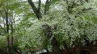【5/26】中禅寺湖北岸の自然情報