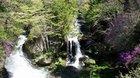 【5/28】竜頭の滝・中禅寺湖北岸・高山の自然(開花)情報