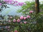 【5/29】湯ノ湖の自然(開花)情報