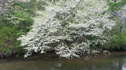 【6/6】湯ノ湖、戦場ヶ原・竜頭滝の自然〔開花)情報