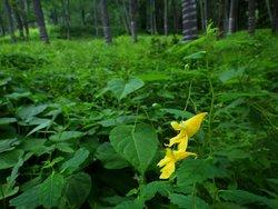 【7/31】千手の森自然情報