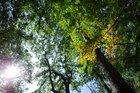 【9/26】千手の森自然情報
