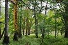 【10/03】千手の森自然情報