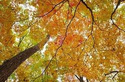 【10/10】千手の森自然情報