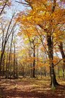 【10/17】千手の森自然情報