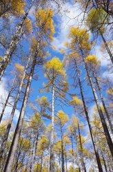 【10/31】千手の森自然情報