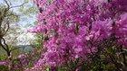 【5/21】竜頭滝・高山の開花と自然状況