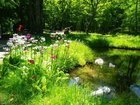 【6/17】千手の森自然情報