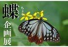 【6/22~8/23】蝶 企画展