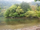 【9/29】千手の森自然情報