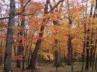 【10/26】千手の森自然情報