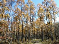 【11/3】千手の森自然情報