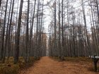 【11/9】千手の森自然情報