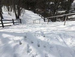 【12月23日~3月31日】企画展「動物の足跡入門」開催のお知らせ