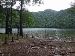 【7/20】千手の森自然情報