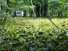 【8/17】千手の森自然情報