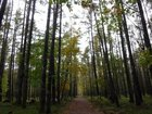 【10/19】千手の森自然情報