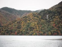 【10/22】千手の森自然情報