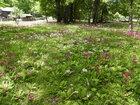 【6/17】千手の森自然情報及び交通機関の運休と歩道通行止めについて