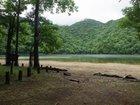 【7/4】千手の森自然情報について