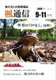 楓通信142号       魅力的な秋の蛾