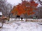 【11/4】湯元は雪景色