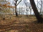 【11/4】千手の森自然情報について