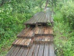 【7/15】戦場ヶ原の木道情報・自然情報