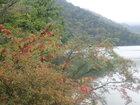 【9/17】湯ノ湖 自然情報